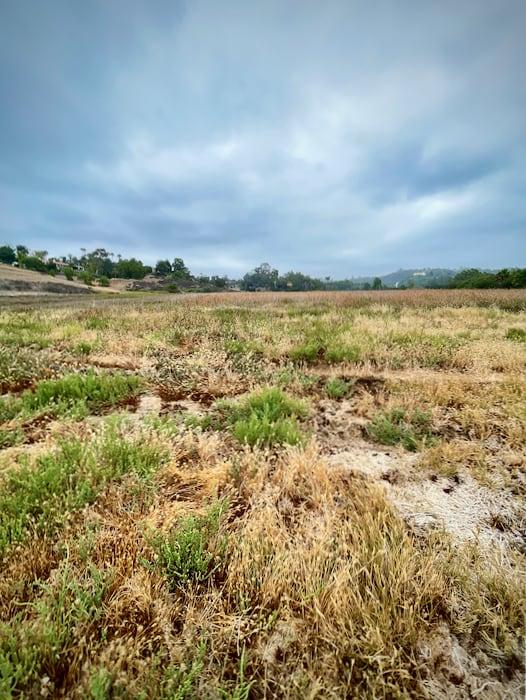 Meadow at San Elijo Lagoon Ecological Reserve