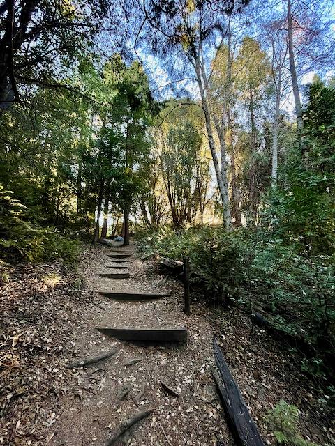 Steps leading down to Doane Creek