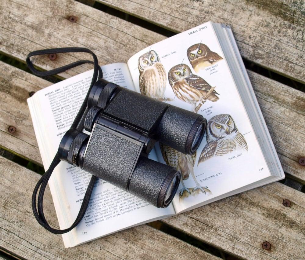 Binoculars and birding field guide
